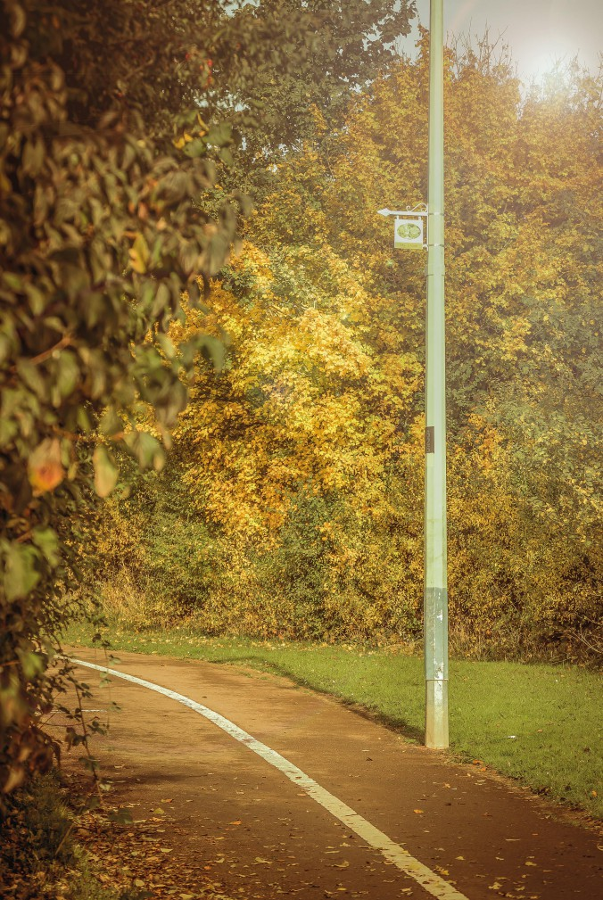 hedges (14)