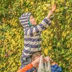 hedges_autumn (3)