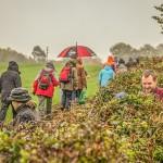 hedges_autumn (5)