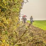 hedges_autumn (6)