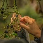 hedges_autumn (8)
