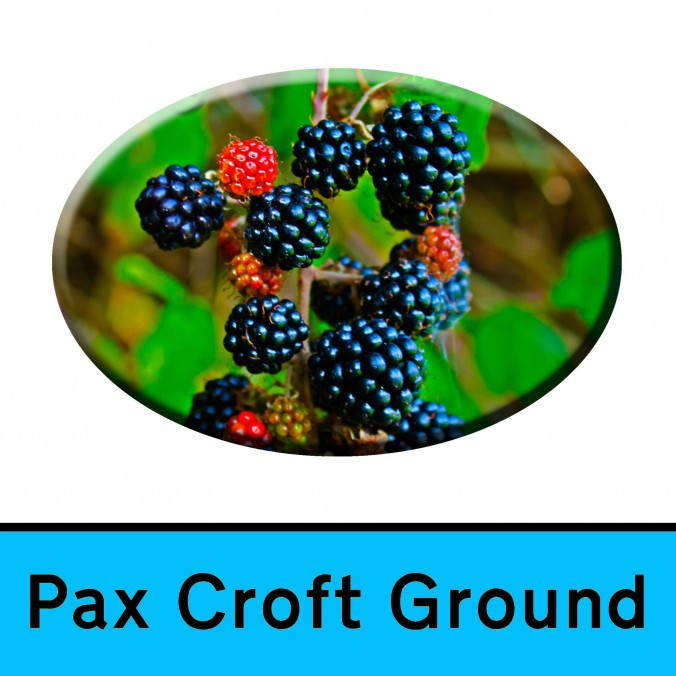 4 Reverse Pax Croft Ground